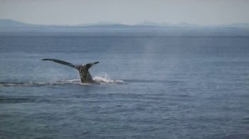 Clipper Vacations Seattle Whale Watching Day Trip TV Spot, 'Experience the Northwest' - Thumbnail 5
