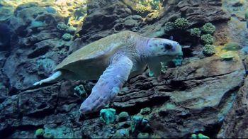 SeaWorld + Aquatica TV Spot, 'Turtle Reef: Now Open' - Thumbnail 2