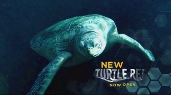 SeaWorld + Aquatica TV Spot, 'Turtle Reef: Now Open' - Thumbnail 3