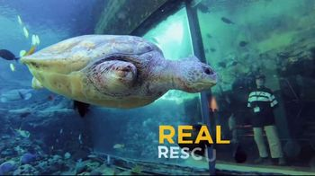 SeaWorld + Aquatica TV Spot, 'Turtle Reef: Now Open' - Thumbnail 4