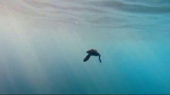 SeaWorld + Aquatica TV Spot, 'Turtle Reef: Now Open' - Thumbnail 8