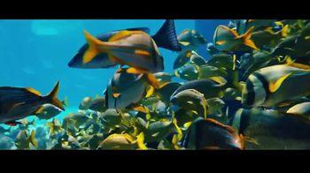 Atlantis TV Spot, 'Bursting With Life: December'