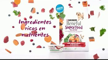 Purina Beneful Superfood Blend TV Spot, 'Súper saludable' [Spanish] - Thumbnail 3