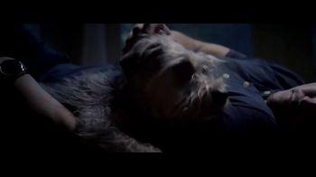 PetArmor TV Spot, 'Storm' - Thumbnail 8