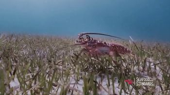 Red Lobster TV Spot, 'Fishing for the Future' - Thumbnail 4