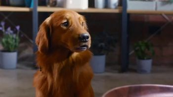 Bush's Best Baked Beans TV Spot, 'Savory Loves Sweet Hot Dog' - Thumbnail 6