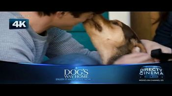 DIRECTV Cinema TV Spot, 'A Dog's Way Home' - Thumbnail 1