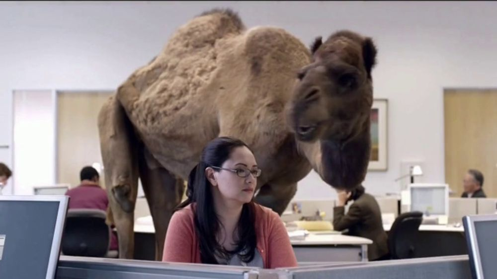 State Farm 24 Hour Roadside Assistance >> GEICO TV Commercial, 'The Best of GEICO: Hump Day' - iSpot.tv