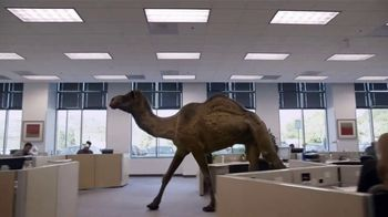 GEICO TV Spot, 'The Best of GEICO: Hump Day' - Thumbnail 3