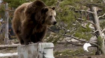 Siberian Coolers TV Spot, 'Be the Alpha'