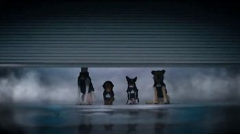 GEICO TV Spot, 'Introducing Smartdogs' - Thumbnail 3