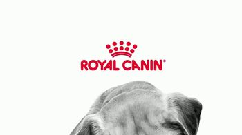 Royal Canin TV Spot, 'Incredible in Every Detail' Song by Booker T. & The MG's - Thumbnail 1