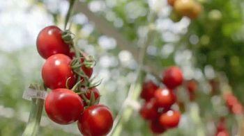 H-E-B TV Spot, 'Mastronardi Tomatoes' - Thumbnail 4