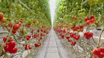 H-E-B TV Spot, 'Mastronardi Tomatoes' - Thumbnail 7