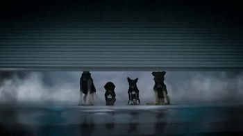 GEICO TV Spot, 'Perros inteligentes' [Spanish] - Thumbnail 3