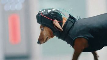 GEICO TV Spot, 'Perros inteligentes' [Spanish] - Thumbnail 4