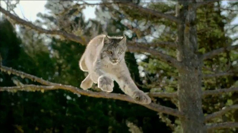 Blue Buffalo BLUE Wilderness TV Commercial, 'Lynx Hunger' - Video