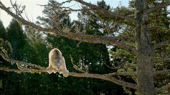 Blue Buffalo BLUE Wilderness TV Spot, 'Lynx Hunger' - Thumbnail 1