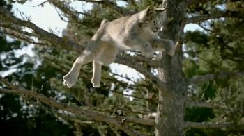 Blue Buffalo BLUE Wilderness TV Spot, 'Lynx Hunger' - Thumbnail 2