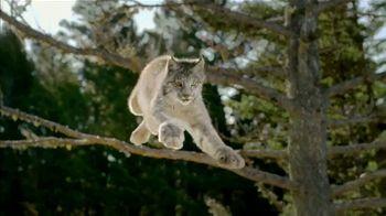 Lynx Hunger thumbnail