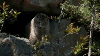 Blue Buffalo BLUE Wilderness TV Spot, 'Lynx Hunger' - Thumbnail 4
