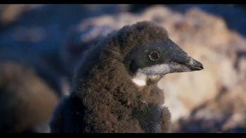 Penguins - Alternate Trailer 16