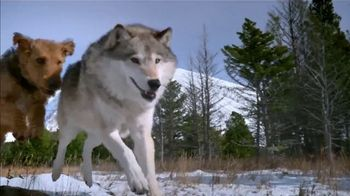 Blue Buffalo BLUE Wilderness TV Spot, 'Wolf Dreams: Tractor Supply Deal' - Thumbnail 4