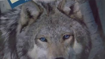 Blue Buffalo BLUE Wilderness TV Spot, 'Wolf Dreams: Tractor Supply Deal' - Thumbnail 5