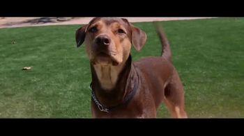 The Shelter Pet Project TV Spot, 'A Dog Way's Home: Bella' Featuring Bryce Dallas Howard
