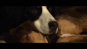 The Shelter Pet Project TV Spot, 'A Dog Way's Home: Bella' Featuring Bryce Dallas Howard - Thumbnail 6