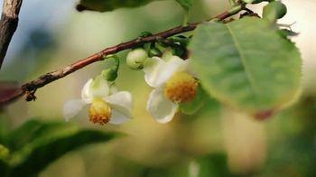 Herbal Essences bio:renew TV Spot, 'Real Botanicals' - Thumbnail 8