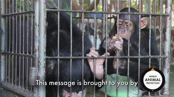 World Animal Protection TV Spot, 'Traumatized Animals'