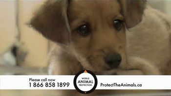 World Animal Protection TV Spot, 'Traumatized Animals' - Thumbnail 8