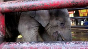 World Animal Protection TV Spot, 'Traumatized Animals' - Thumbnail 3