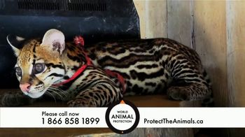 World Animal Protection TV Spot, 'Traumatized Animals' - Thumbnail 4