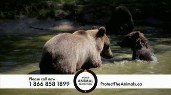 World Animal Protection TV Spot, 'Traumatized Animals' - Thumbnail 5