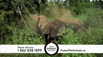 World Animal Protection TV Spot, 'Traumatized Animals' - Thumbnail 6