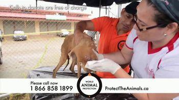 World Animal Protection TV Spot, 'Traumatized Animals' - Thumbnail 7