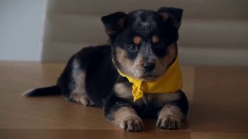 GEICO TV Spot, 'Animal Planet: Puppy Bowl Pay Day' - Thumbnail 5