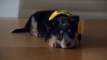 GEICO TV Spot, 'Animal Planet: Puppy Bowl Pay Day' - Thumbnail 9