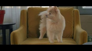 Wells Fargo Home Mortgage TV Spot, 'Lulu and Lobo' - Thumbnail 2
