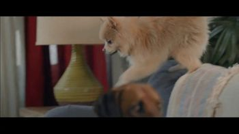 Wells Fargo Home Mortgage TV Spot, 'Lulu and Lobo' - Thumbnail 3