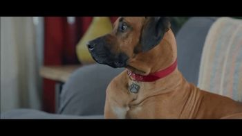 Wells Fargo Home Mortgage TV Spot, 'Lulu and Lobo' - Thumbnail 6