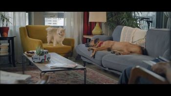 Wells Fargo Home Mortgage TV Spot, 'Lulu and Lobo' - Thumbnail 7