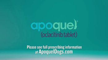 Apoquel TV Spot, 'Allergic Itch' - Thumbnail 8