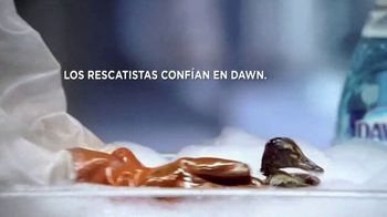 Dawn Ultra TV Spot, 'Rescatistas' [Spanish] - Thumbnail 3