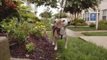 The Shelter Pet Project TV Spot, 'Everyday People' - Thumbnail 9