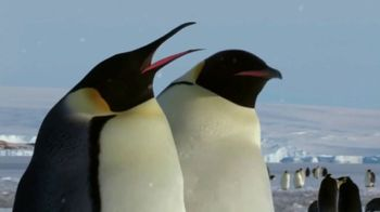 Metro by T-Mobile TV Spot, 'Pinguinos' [Spanish] - Thumbnail 4