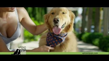 Uptown Pups TV Spot, 'The Most Interesting Pup in Town' Featuring Kevin Harrington - Thumbnail 5