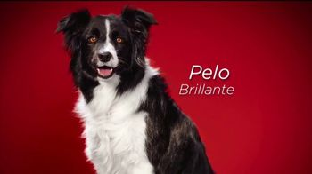 Purina ONE TV Spot, '28 Días. Una mascota visiblemente saludable.' [Spanish] - Thumbnail 5